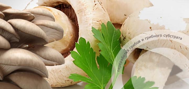 mushroom-flower