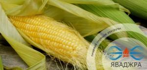 Пищевой порошок кукурузы