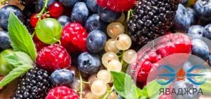 ягодные порошки - порошок ягод