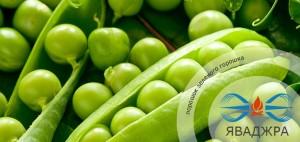 Порошок зеленого горошка